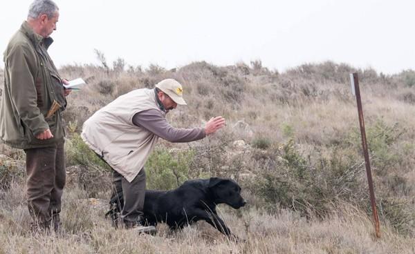 Canis Amicus en pruebas de Campo