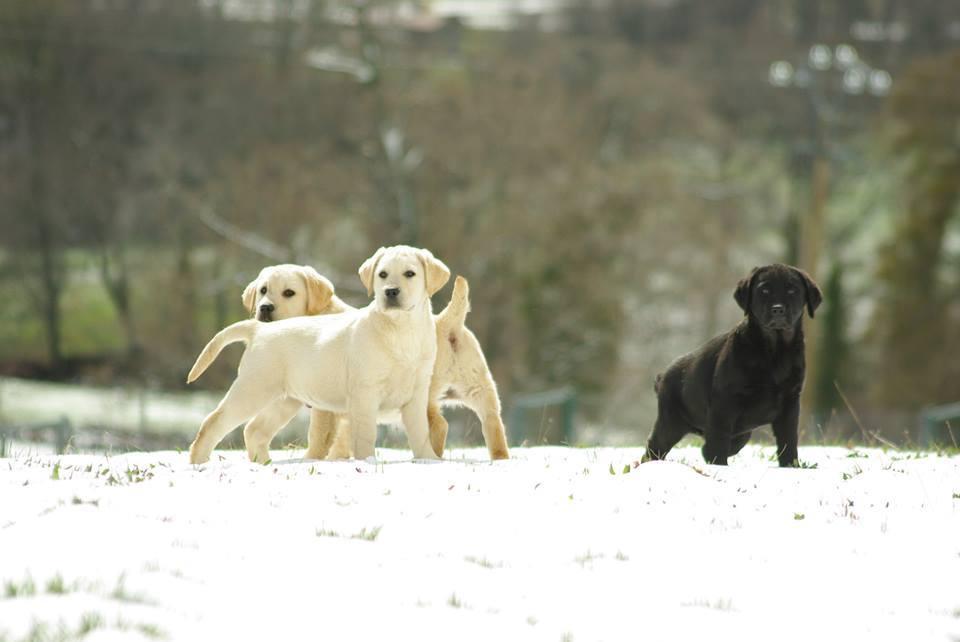 Cachorros de Canis Amicus Delma